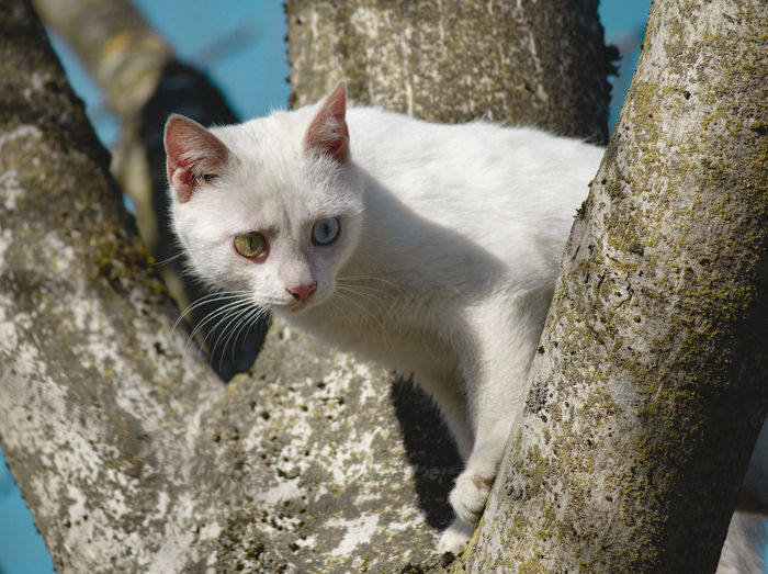 Eyes Feline Animal Themes Animal One Animal Cat Mammal Domestic Cat Pets Domestic Domestic Animals Vertebrate Looking At Camera Trunk Tree Trunk Tree Day Focus On Foreground No People Portrait Whisker