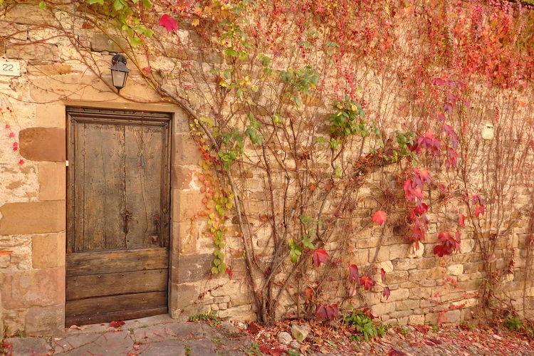CORDES SUR CIEL Porte Door Vigne Vierge