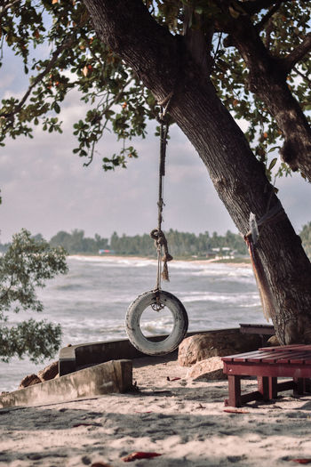 View of hanging from tree trunk at beach against sky