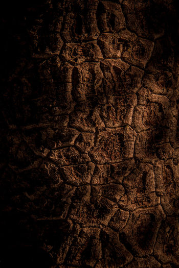 Close-up of tree trunk in the dark