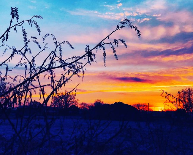 Sunset Sky Nature Beauty In Nature Cloud - Sky Silhouette Scenics Tree Tranquility Orange Color Tranquil Scene Dramatic Sky Outdoors Bare Tree No People Branch Landscape Cold Temperature Winter Flying