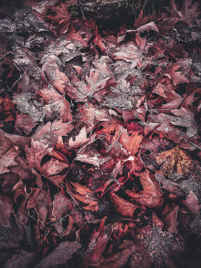 Full frame shot of dry autumn leaves