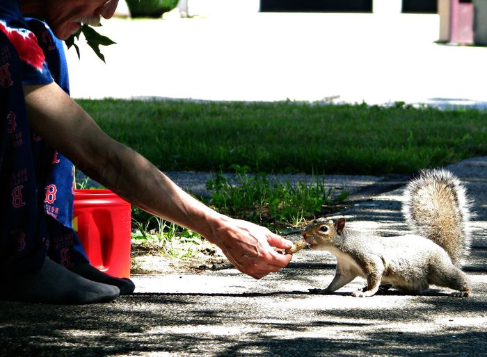 Adult Animal Themes Day Feeding Squirrel Mammal One Animal One Person Outdoors Peanut People Real People Squirrel Wildlife