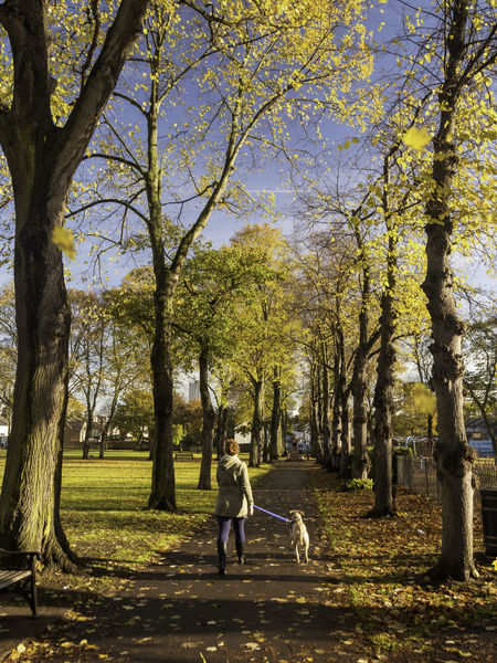 A woman and her dog are walking at St. Paul's Recreation Ground, Brentford, London, England Adult Adults Only Alley Autumn Autumn Colors Autumn Leaves Beauty In Nature Day Dog Full Length Grass Leaves Leisure Activity London London Lifestyle LONDON❤ Nature One Person Outdoors People Real People Rear View Sky Tree Tree Alley