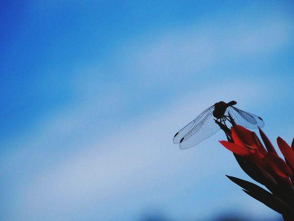 秋 トンボ Sky Sky_collection Eye Em Nature Lover EyeEm Best Shots