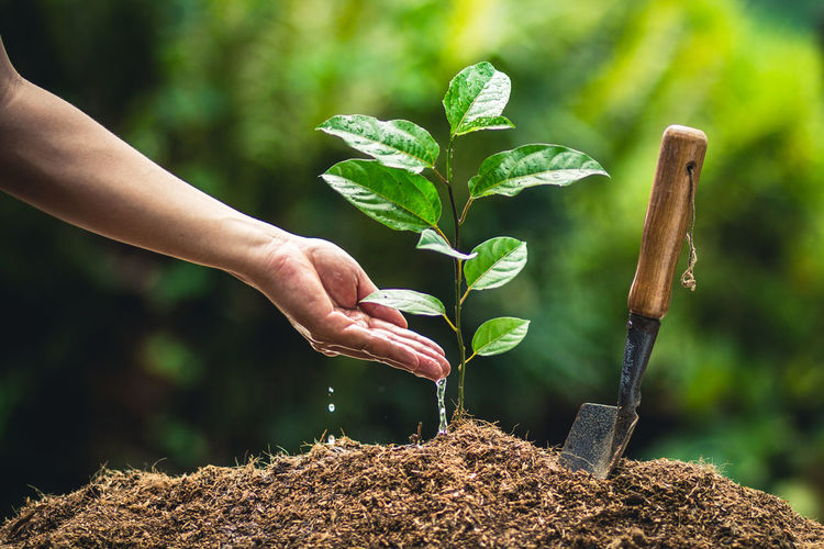 Midsection of man planting sapling in farm