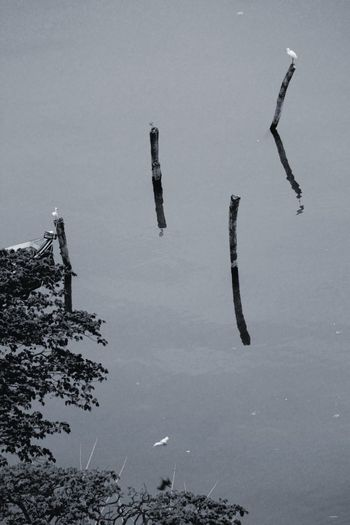 Serenity Birds Poles Poles Apart View Outside My Window  Reflected Glory