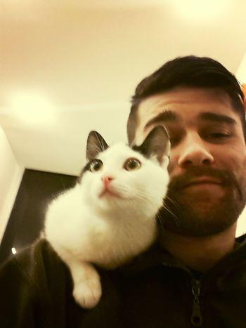 Cute Pets Cat Kızım