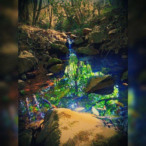 Water Natureza Mata🌴🌲🌳
