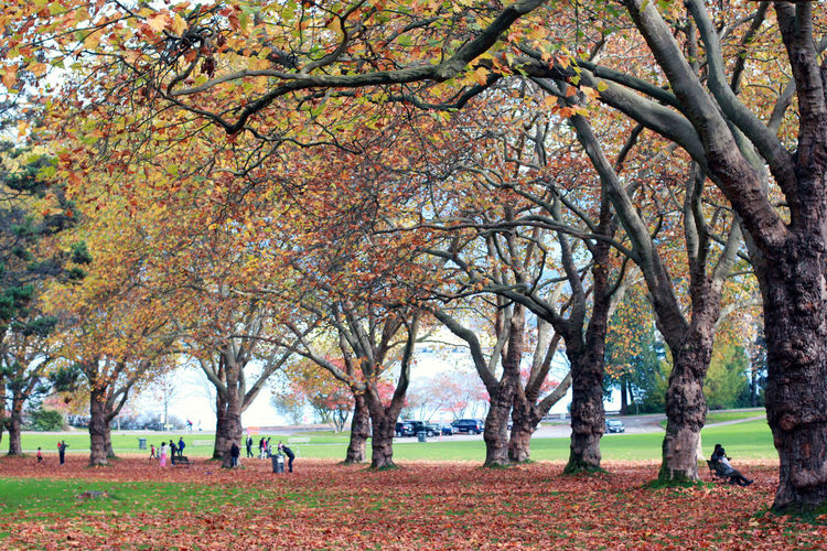 Autumn at Stanley Park Autumn Beauty In Nature Branch Change Day Growth Nature Outdoors People Tree