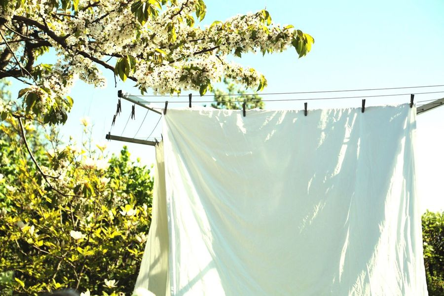 Fabric Clothespin Clothespins Clothing Line Drying Rack Fresh And Clean Fresh Summer Days Summer Vibes Freshness White Flowers Copyspace Sheet Linnen White Color Laundry Day White Blossom Tree Blossoming Tree White Sheets Detergent Fresh Scent Fresh Flowers Everyday Joy Garden Photography