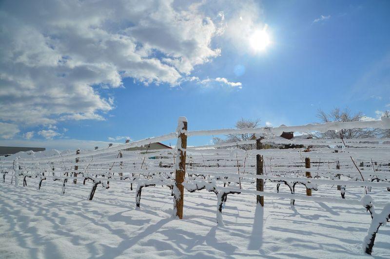 I'm in Japan Hokkaido Ikeda Wine Castle Wine~~~ Winter