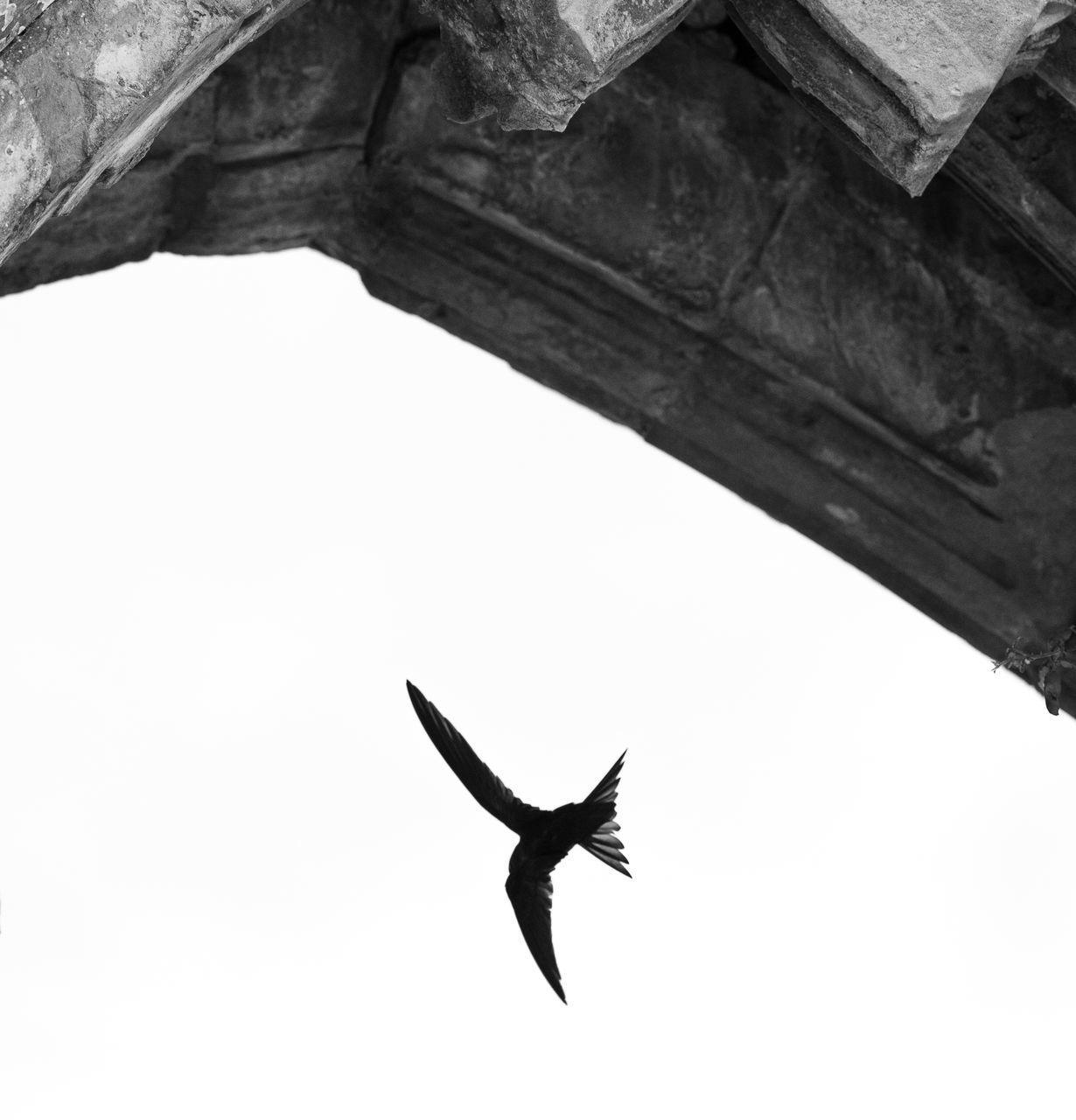 DIRECTLY BELOW SHOT OF BIRD FLYING