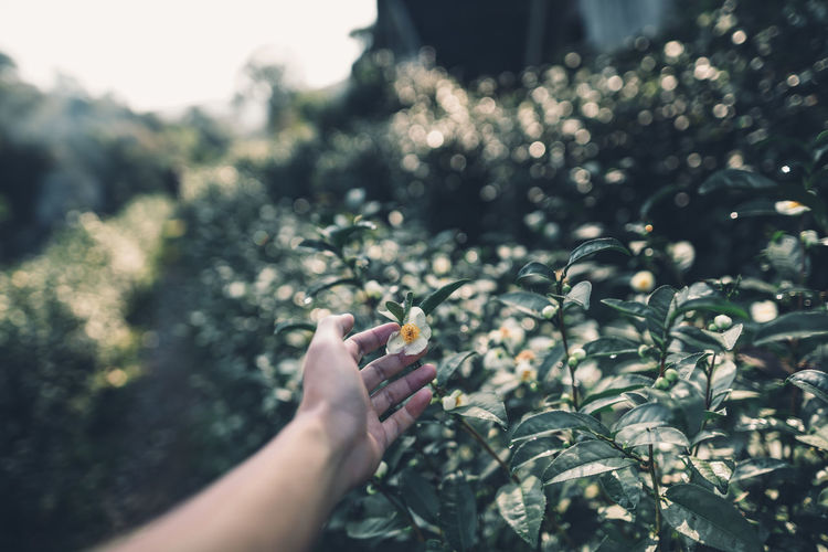 Cropped hand of person touching flowering plants