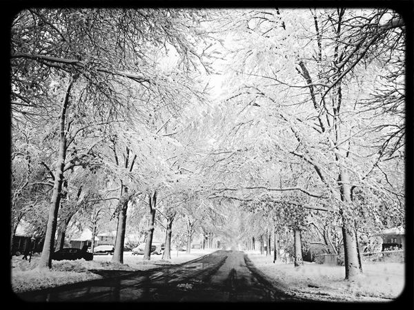 Winter Wonderland EE_Daily: Black And White Sunday KC Through KCe EyeEm Best Shots - Trees