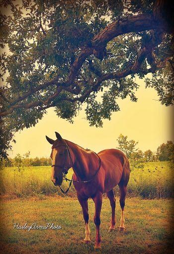 My Majestic beast, more like princess.. she acts like one Horses Nature EyeEm Best Shots Inspiration