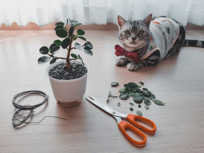 Cat and potted plants on table