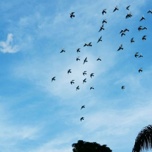 Flock Of Birds Cloud - Sky Sky Flying Large Group Of Animals Nature Low Angle View Horizontal