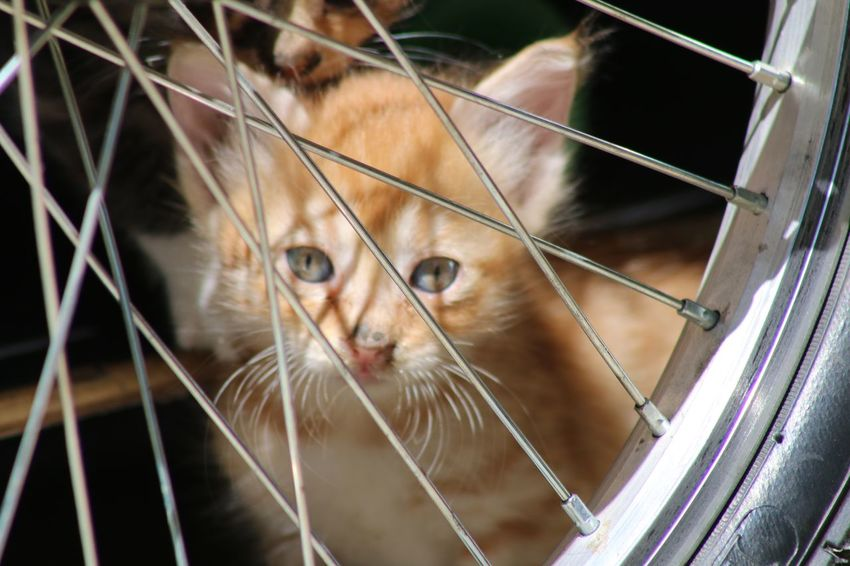 Cyprus Limassol Cat♡ Cat Lovers Cats Of EyeEm Cat Kiddy Cats Mammal Animal Themes Pets Animal One Animal Domestic Animals Domestic Cat Feline Vertebrate Domestic Cat Cage Whisker Close-up No People Animals In Captivity Animal Body Part Day Portrait Looking At Camera
