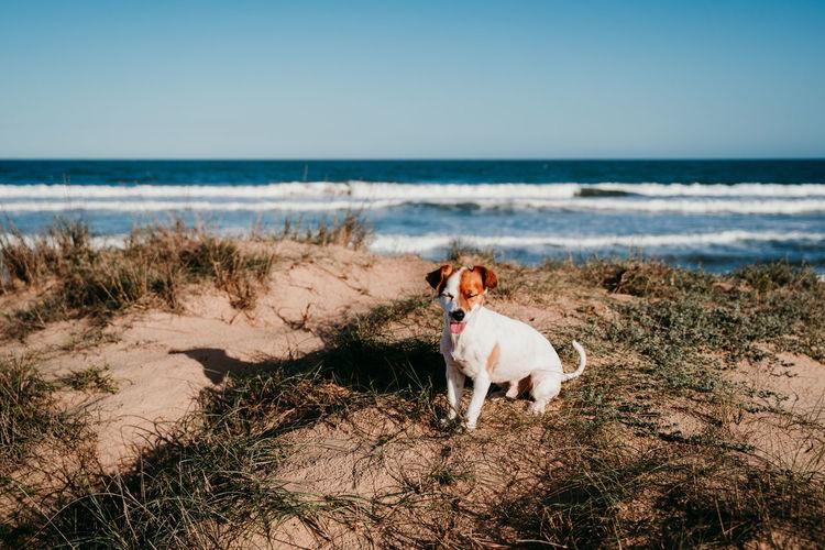 Full length of dog sitting at beach