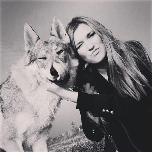 ???? Csv Czechoslovakianwolfdog Wolfdog Vlcak vlciak wilczak wilk direwolf czechoslowackiwilczak ceskoslovanskyvlcak canelupocecoslovacco lupo lupi loup dogphotography poland instawolf wolfstagram instaphoto instapic tesoridicarli