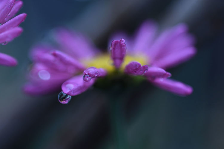 Rainy day II Flowering Plant Flower Vulnerability  Fragility Freshness Plant Petal Beauty In Nature Close-up Growth Purple Selective Focus Inflorescence Drop Flower Head Water Wet Nature No People Outdoors Pollen Dew RainDrop Purity EyeEm Best Shots EyeEmNewHere EyeEm Nature Lover EyeEm Selects EyeEm Gallery Macro Macro Photography Macro_collection Macro Beauty Macro Nature Nature Nature_collection Nature Photography Naturelovers