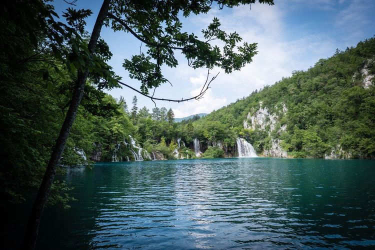 Plitvice lake Waterfall Plitvice National Park Tree Plant Water Nature Growth Tranquility Beauty In Nature Scenics - Nature Lake Outdoors