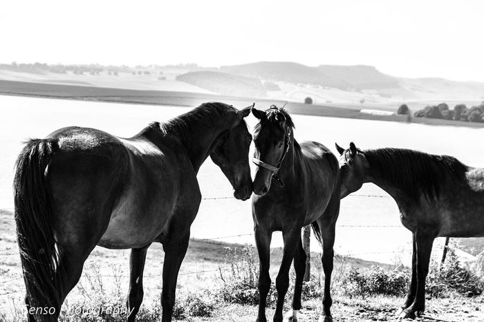 Lake Tamronlens Tamron18400 Canon80d📷 Canonphotography Friends Horses Playing Youngster Hanoverian Blackandwhite Blackandwhite Photography Horse Animal Group Of Animals Domestic Animals Water Nature Sea Animal Themes Outdoors Beauty In Nature Mountain Day Sky No People Mammal