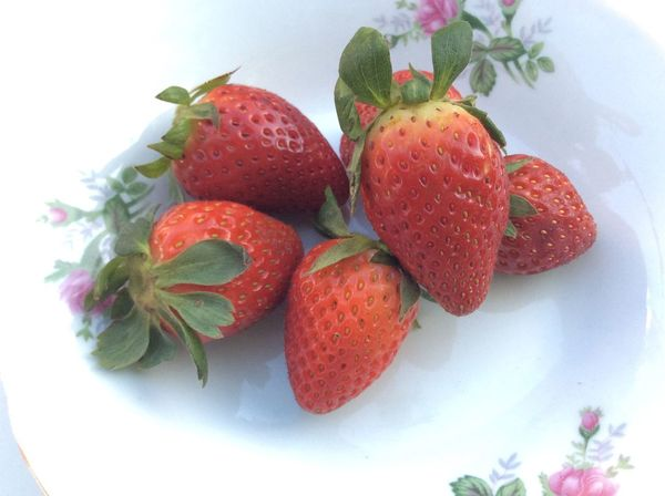Red Strawberries Strawberry Freshness Fresh Vintage Red Plate Leaf Nature Natural My Favorite Breakfast Moment