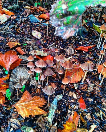 TAGDISTRICT .App @TagDistrict Leafs Gorgeous Beautiful Life Pictureoftheday WildMushrooms Green TD Td_nature WoodLand Autumn Nature Beautiful Treesrock Forest Wood Woods Instanature Leafs Backwoods Backcountry Chingford London