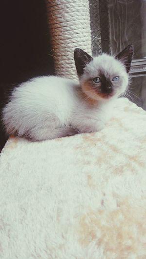 My new toy? My Baby♡ Cat♡