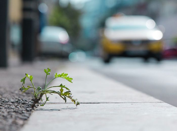 Close-up of small plant growing on road