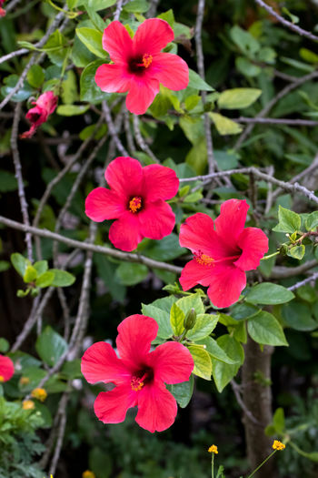 Flowering Plant Flower Fragility Vulnerability  Plant Inflorescence Growth Freshness Flower Head Beauty In Nature Petal Close-up Red Focus On Foreground Nature Day No People Pink Color Plant Part Outdoors