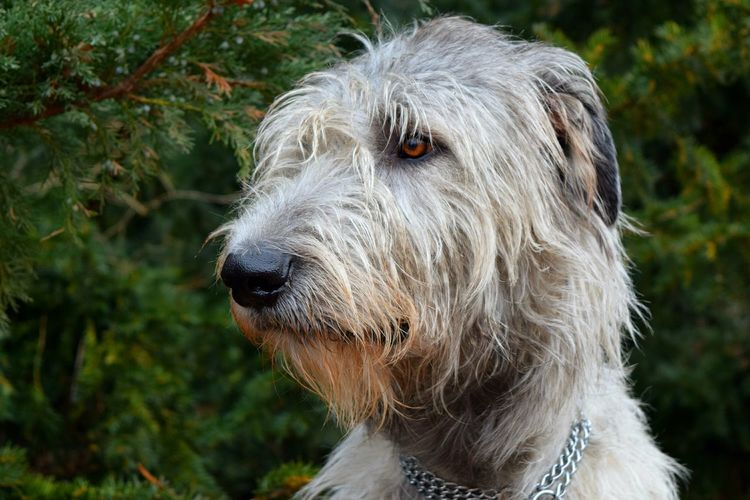 One Animal Animal Themes Close-up Dog Outdoors Cold Temperature How's The Weather Today? Winter 2017 February 2017 Dogs Of Winter Cearnaigh Dogslife Irish Wolfhound Dogs Of EyeEm Nature Domestic Animals Eyes Are Soul Reflection Bokeh