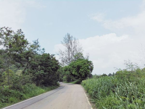 The Way Forward Tree Road Day Cloud - Sky Growth Nature Outdoors No People Sky Plant Rural Scene Beauty In Nature