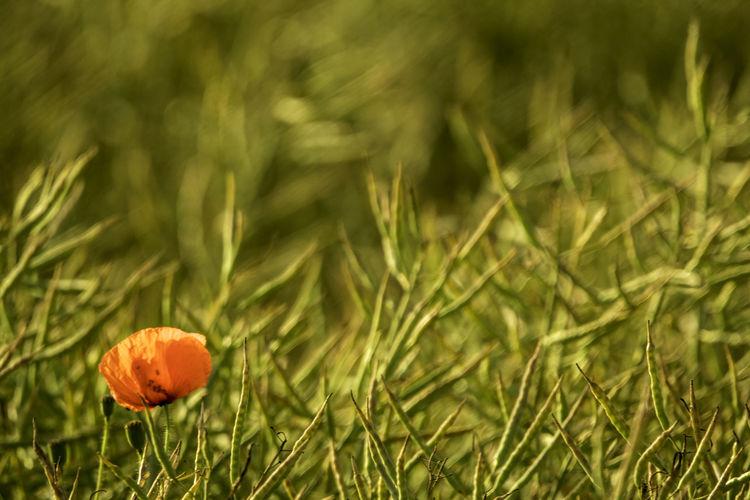 Close-up of orange flowering plants on land