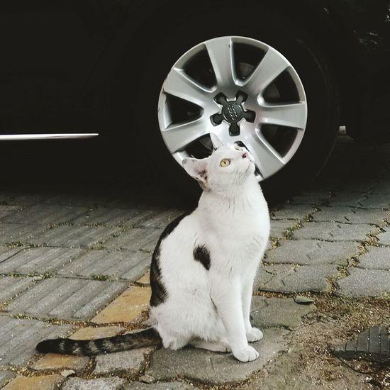 Cat♡ What I Saw Enjoying Life