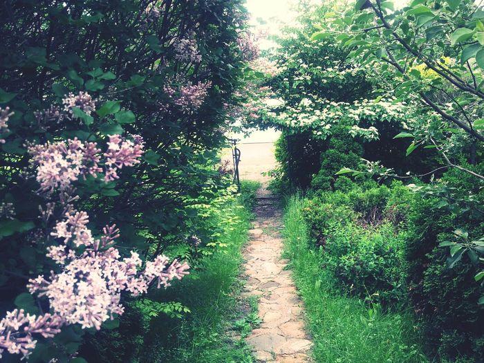 Garden Beuatiful