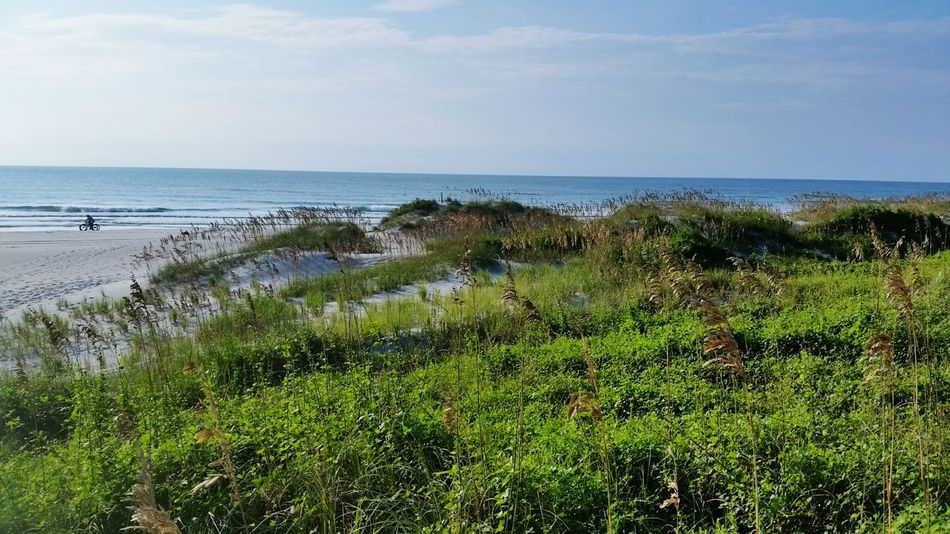 Sand Dunes Wild Dunes Beachphotography Sea Oats Wrightsville Beach Landscapes With WhiteWall