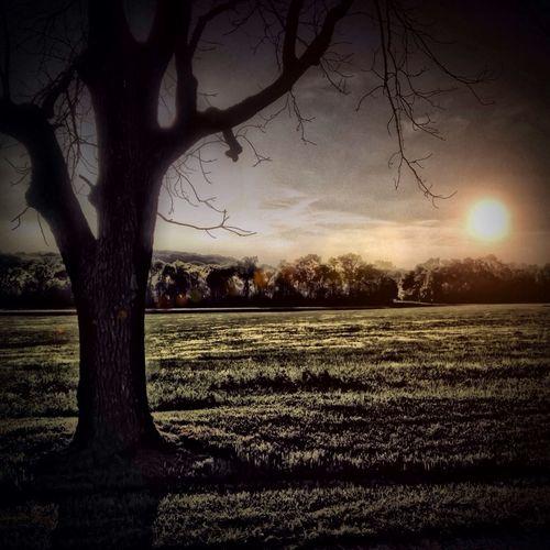 Timages Tree Solitude Sunset Evening Twilight Twilight Sky Passion Grace Compass Compassion Sadness Mellow Nobel Beattitude Empathy Reason Bunt Rogue Emptiness Noir Necromancer Lucid Clover Cadaver