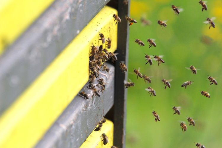 High Angle View Of Honey Bees Entering Beehive