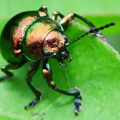 Baraya_ig Ig_4every1 Naturehippys Hdmacros macro_captures rsa_macro ic_macro macrongawi insect_perfection jj_macro bestofmacros macro_perfection md_macro my_daily_macro best_macro