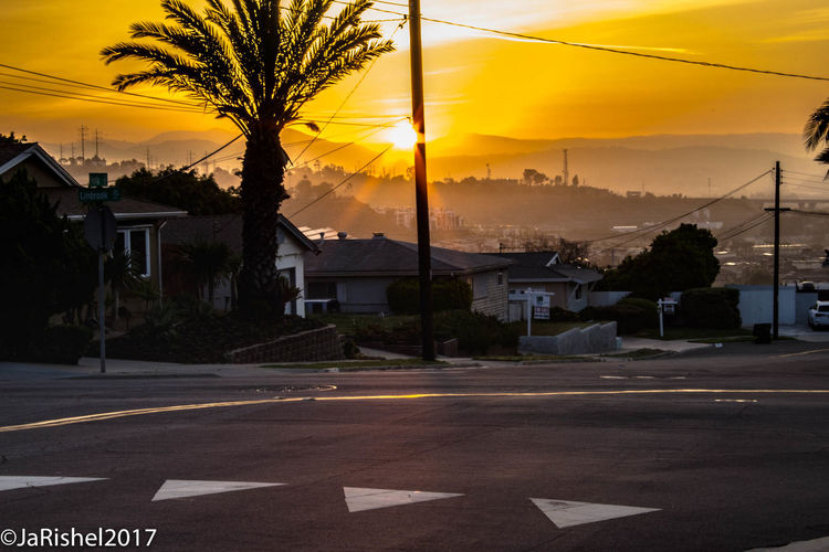 Architecture Built Structure Palm Tree Road Road Paint San Diego Sunrise - Dawn Sunrise And Clouds Sunrise Silhouette Sunrise_Collection Transportation Tree