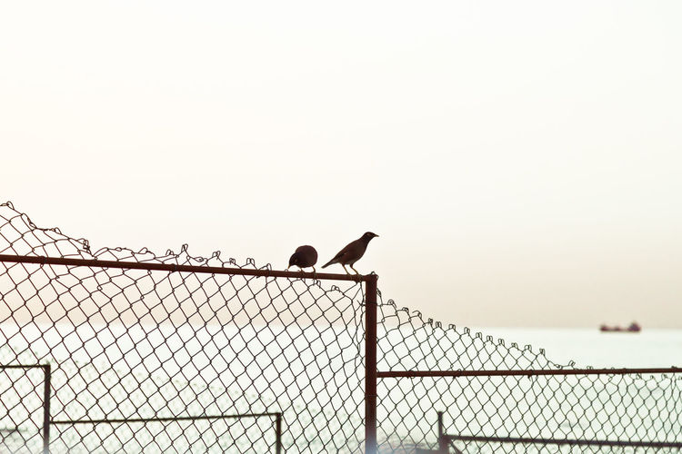 Low angle view of birds perching on fence against sky