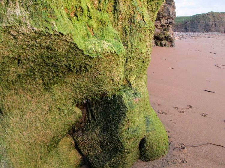 Beach Beauty In Nature Geology Green Color Ireland Nature Non Urban Scene Outdoors Rock Rock Formation