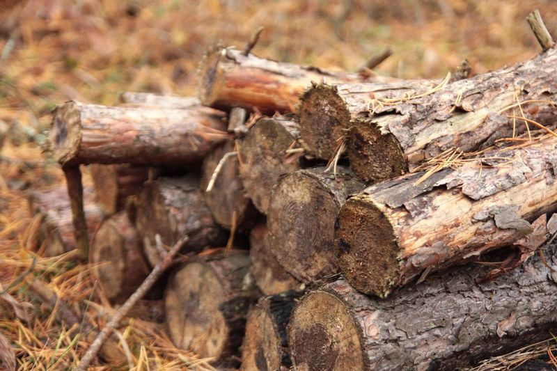 Close-up Non-urban Scene Wood Fuel Fuel Wood Weathered Nature Outdoors Heap WoodLand Dead Tree To Live In The Wild Life In The Wood Firewood Focus On Foreground Day TakeoverContrast