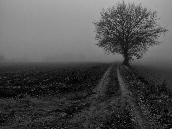 Silhouette Bare Tree On Field In Foggy Weather