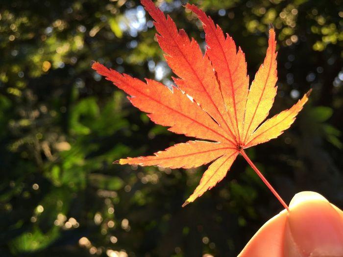 Close-up of orange leaf on plant during autumn