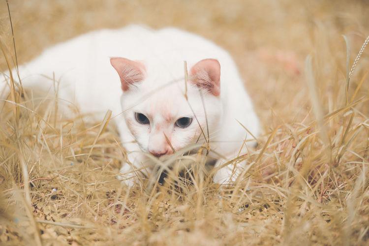 Close-up portrait of a cat in field