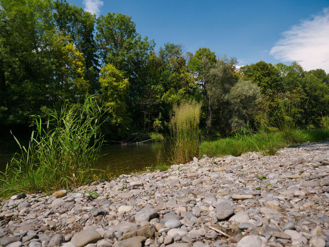 Gravel bed on the banks of the Isar in Munich on a sunny and hot summer day with trees on the other side of the river Flow  Grass Green Hot Isar Munich Trees Blue Blue Sky Clouds Day Gravel Heat Ismaning Shore Stones Summer Swim To Bathe Warm Water